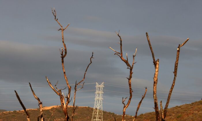 An electricity pylon is seen next to a tree burned by a wildfire before expected heavy rain in Los Angeles, Calif. on Jan. 28, 2021. (Lucy Nicholson/REUTERS)