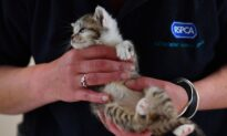 UK's Largest Animal Charity May Pass Prosecution of Animal Abuse to Crown Prosecution Service