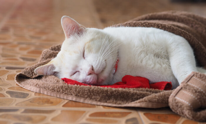 A towel for a small dog or cat will make a warm, soft place to curl up. (Bosavang/Shutterstock)