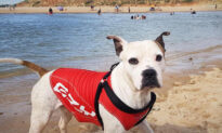 Dog in Lifejacket Rushes to Rescue Boy Drowning in River in Australia, Tows Him to Safety