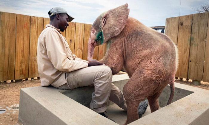 (Courtesy of HERD - Hoedspruit Elephant Rehabilitation and Development)