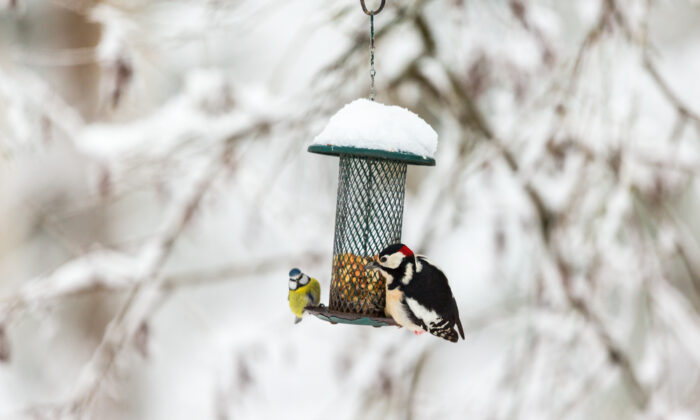 You can watch birds at a feeder while you are sitting on the couch, or you can go to a park to see them. (TTphoto/Shutterstock)