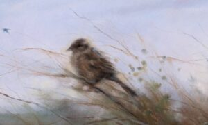 Pure Beauty: 'Birds of the Air, Grass of the Field'