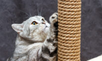 Ask the Vet: Cat Scratching Posts Must Be Tall, Stable, and Numerous