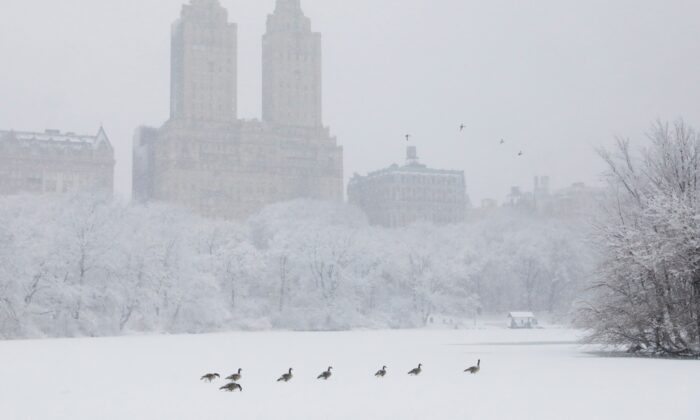 Birds make their way across a frozen lake in Central Park during heavy snowfall in New York City on Feb. 7, 2021. (Andrew Kelly/Reuters)