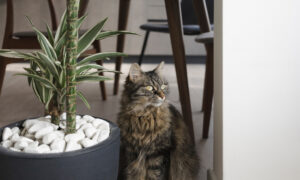 Ask the Vet: Prevent Cats From Using Potted Plants by Making Litter Boxes Appealing