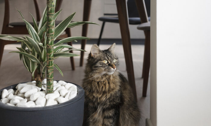 Make the planters uninviting to keep your cats away. (Stokkete/Shutterstock)