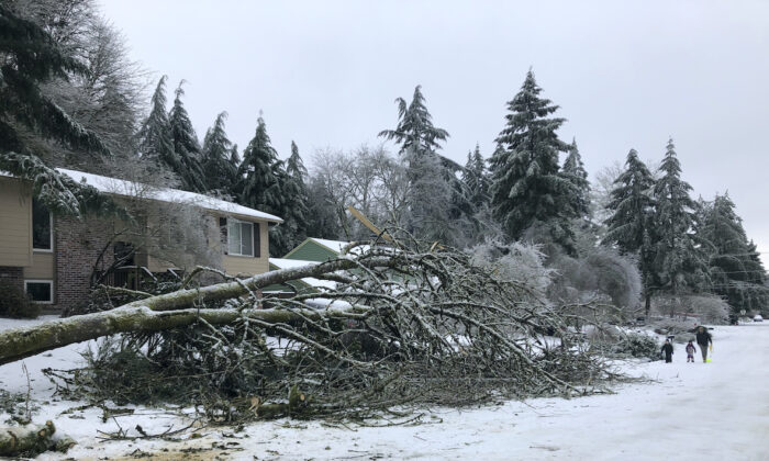 People walk by a collapsed tree in Lake Oswego, Ore., Saturday, Feb. 13, 2021. (Gillian Flaccus/ AP Photo)
