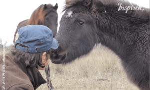 The Wild Horse Thanks Its Savior