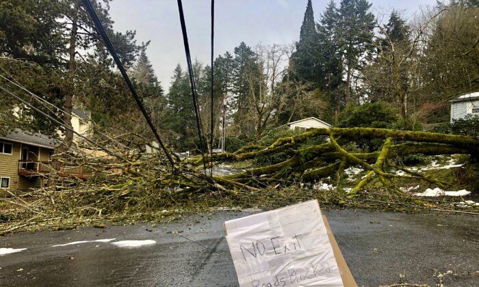 A large tree downed in a weekend ice storm sits atop power lines in Lake Oswego, Ore., on Feb. 17, 2021. (Gillian Flaccus/AP Photo)