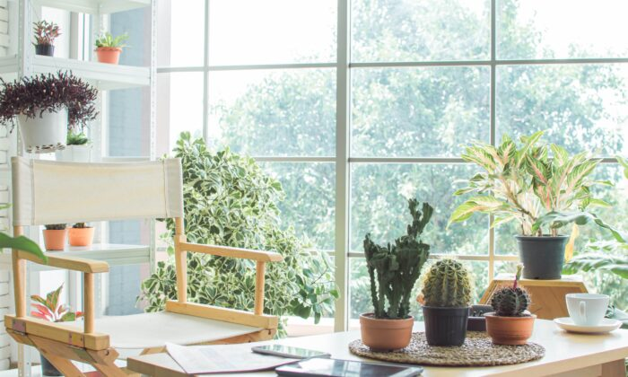 Having plants in your home can clean the air and enliven the atmosphere. (Ann Rodchua/Shutterstock)