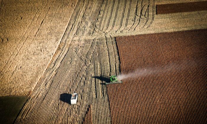 A farmer harvests crops near Presho, South Dakota, on Oct. 13, 2014. (Andrew Burton/Getty Images)