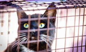Cat Trappers Plea for Help Sterilizing Free-Roaming Felines