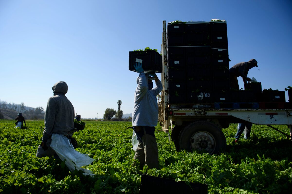 farmworkers-1200x800 California Passes Bill Approving $600 Stimulus Payments for 5.7 Million People U.S. [your]NEWS
