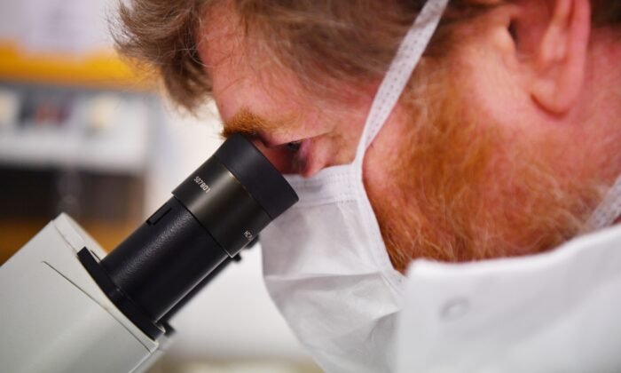 A scientist uses a microscope to look at cells containing the novel coronavirus SARS-CoV-2 in a file photo taken at the Stabilitech laboratory in Burgess Hill south east England on May 15, 2020. (Ben Stansall/AFP via Getty Images)