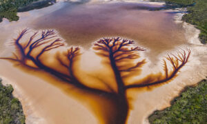 Photographer Captures Striking 'Tree of Life' in Aerial Images of Receding Lake: Video