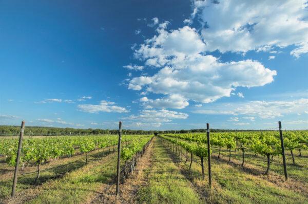 texas wine