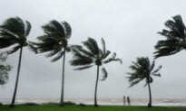 Cyclone Niran Leaves 30 Schools Closed and 43,000 Houses Without Power