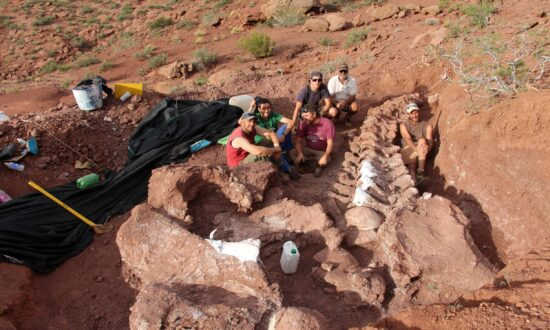 Fossils of Oldest Member of Huge Dinosaur Group Found in Argentina
