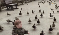 These Ducks Are Hilarious