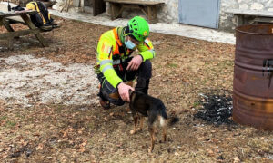 Dog Stays With Injured Hiker in Freezing Italian Alps for 7 Nights Until Rescuers Airlift Them to Safety