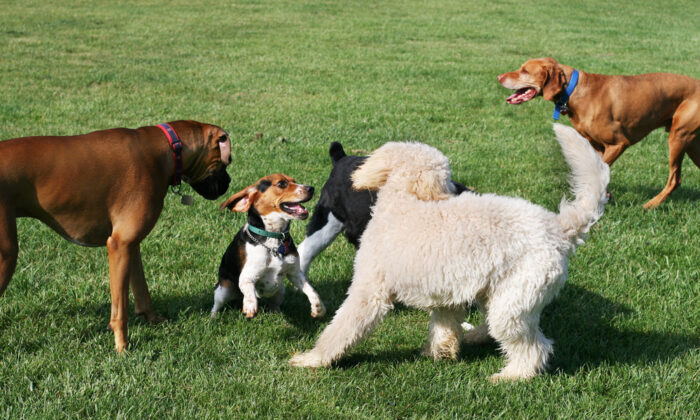 A new system will require dog owners to update details annually to promote safer pets and community. (Joy Brown/Shutterstock)
