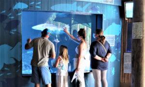 Aquarium Encounters Offers Play With Sea Creatures
