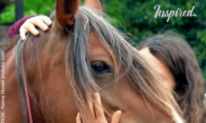 Feenja – Story of a Wild Mustang