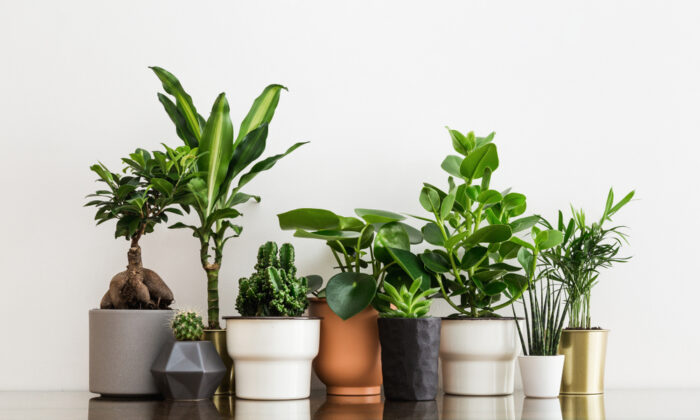 Different types of plants need different amounts of light. (Mallmo/Shutterstock)