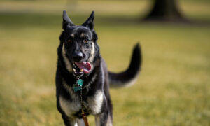 Biden's Dogs Return to White House After Incident