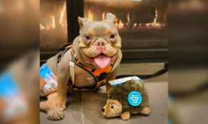 Incontinent Puppy With Spina Bifida, Stood Up by Potential Adopters, Finds Perfect Fur-Ever Family