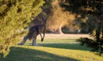 US Congress Considers Ban of Australian Kangaroo Products