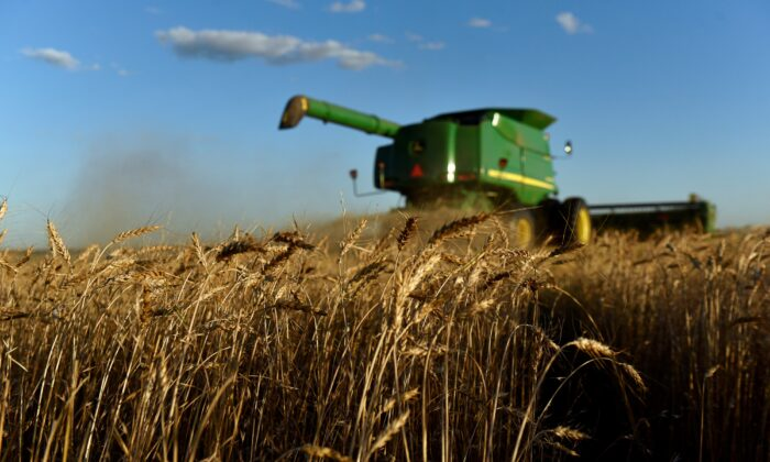 A combine harvests wheat in Corn, Oklahoma, on June 12, 2019. (Nick Oxford/Reuters, File Photo)