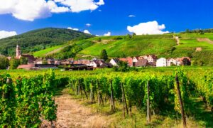 The Gorgeous Wines of Alsace