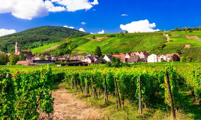 Alsace is one of France's finest wine-growing regions—and one of its least understood. (leoks/shutterstock)