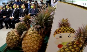 Australian Growers Concerned About Potential Taiwan Pineapple Imports