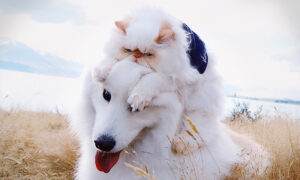 Hilarious Photos Show the Unlikely Friendship Between a 'Grumpy' Kitten and a Fluffy Dog