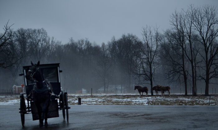An Amish buggy passes horses in Shipshewana, Ind., on Jan. 24, 2020. (Brendan Smialowski /AFP via Getty Images)
