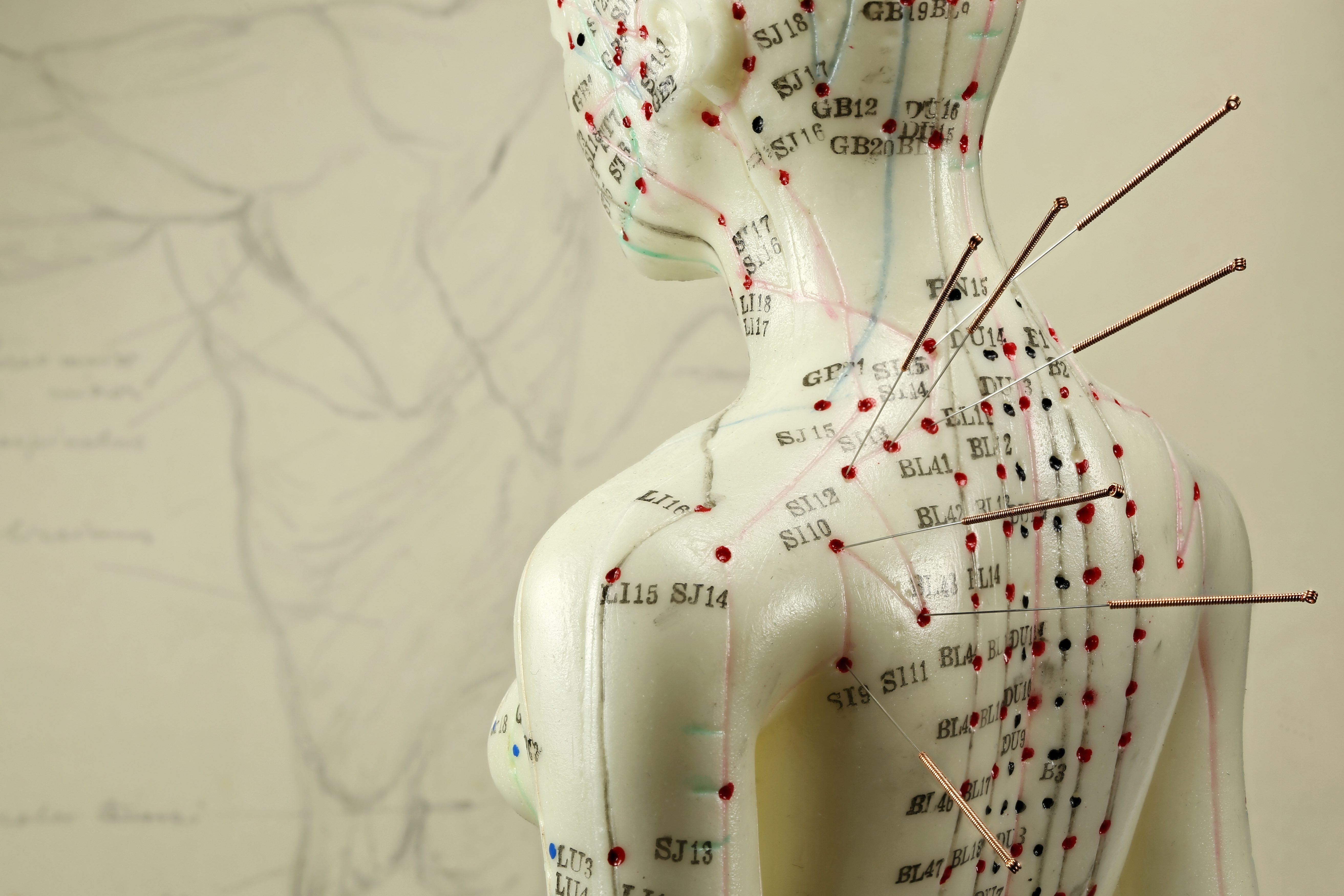 Just as traditional Chinese medicine emphasizes the underlying energetic systems in the body, it also attunes to the energetic nature of the seasons. (Bjoern Wylezich/Shutterstock)