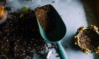 Soil: A Basic Primer for Your First Garden