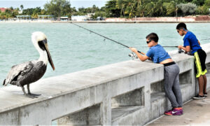 Find Fish, Kitsch, and Wildlife in the Florida Keys