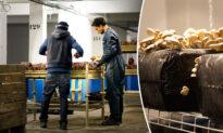 Disused Underground Parking Lot Repurposed as Organic Mushroom Farm Under Streets of Paris
