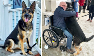 Heroic Rescue Dog Saves New Owner's Life by Dragging Him After He Suffered a Stroke