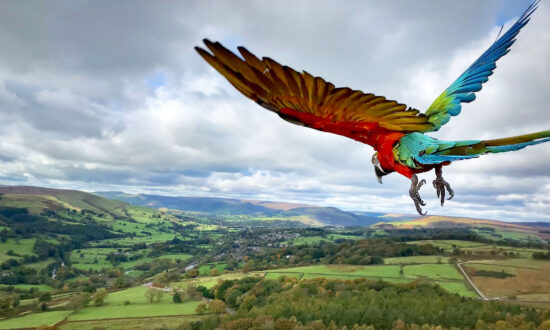 Parrot Trained to Free-Fly Soars Above Spectacular English Landscape, and the Photos Are Incredible