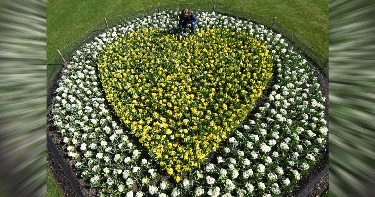 Planting tribute at Kew Gardens to remember those lost to COVID-19 at Royal Botanic Gardens, Kew, London