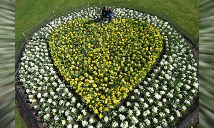 Kew horticulturalist Joanna Bates tends to a 'Yellow Hearts to Remember' planting tribute to remember those lost to COVID-19, a year since the first British lockdown began due to the coronavirus disease pandemic, Royal Botanic Gardens, Kew, London, Britain, on March 22, 2021. (Toby Melville/Reuters)