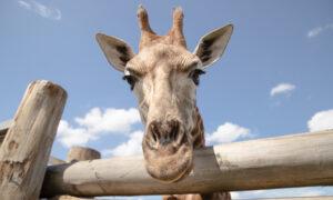 Australian Zoo Offers Free Trips to 70,000 School Kids