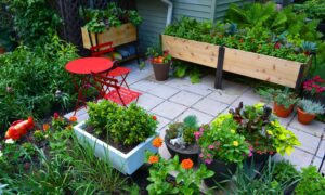 A Kitchen Container Garden Can Get Your Family to Eat More Vegetables