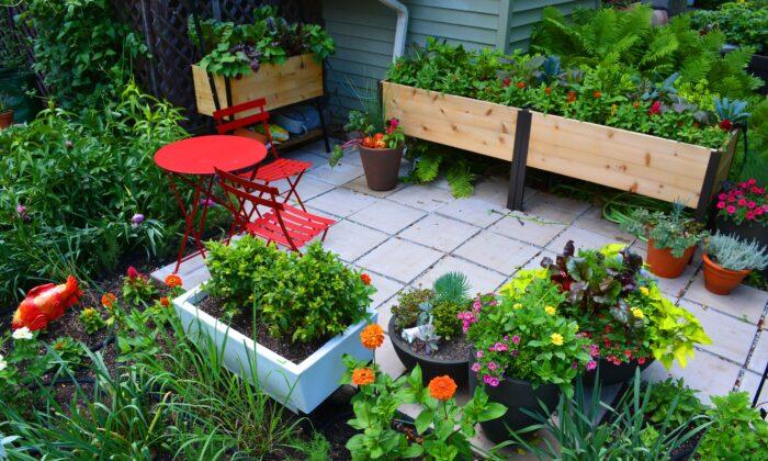 Elevated Bed Patio Garden. (Shawna Coronado)
