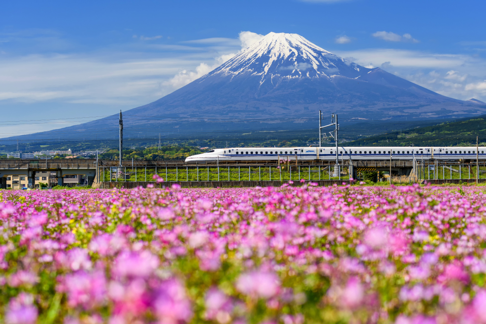 The Shinkansen, also known as the bullet train, runs past the imposing Mt. Fuji during the spring, while shibazakura flowers are in bloom. (Blanscape/Shutterstock.com)
